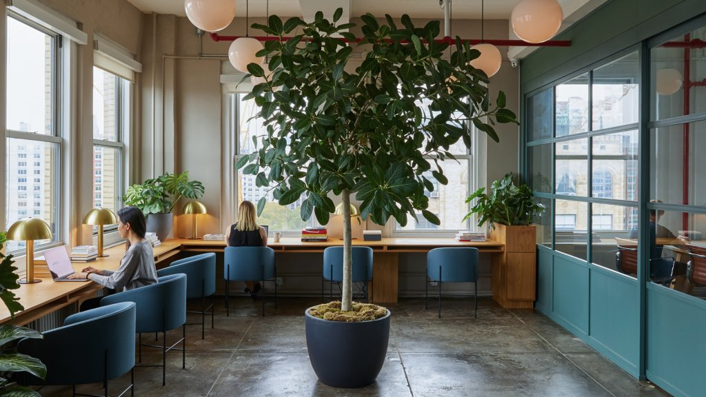 How to Design the Ideal Office (and Why Open Layouts Aren't Always Bad)