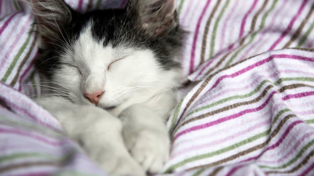 5 Ways To Fall Asleep Faster