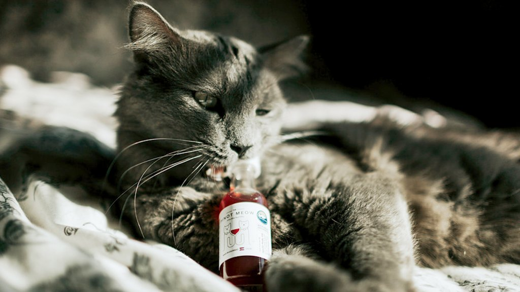 Yes, Getting Your Pet Fake-Drunk Is a Thing--and a Business