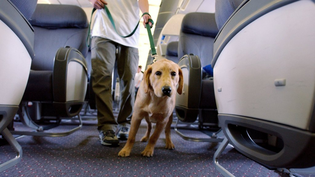 Dog Bloodies Man on Delta Flight (How Many Emotional Support Dogs Are for Real?)