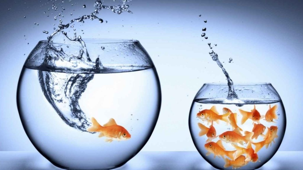 Why It's Better to Be a Big Fish in a Small Pond