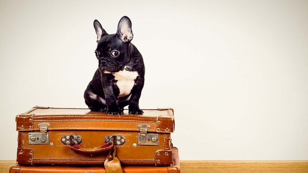 This Just Might Be the Best Summer Internship Ever (But It's Really Going to the Dogs)