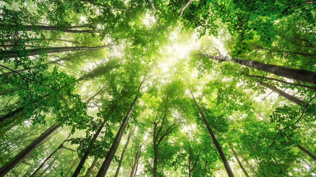 The Unique Challenges of Starting an Environmentally Conscious Company