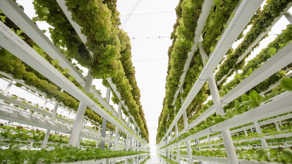 Bowery Raises $20M to Build Vertical Farms