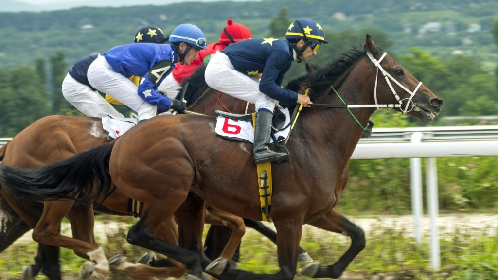 Make money horse betting open source betting software images