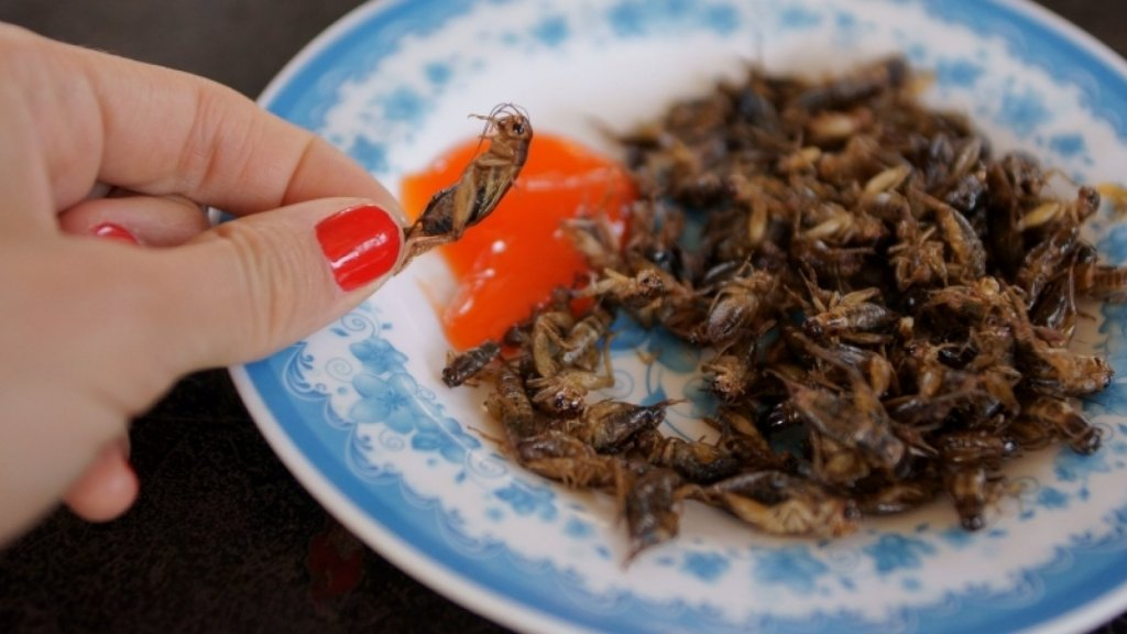 Exo Raises $4M to Get Consumers Feasting on Crickets