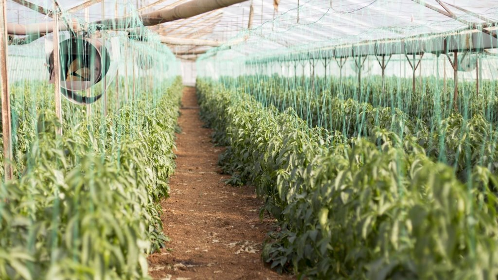Tilray to Start Growing and Selling Marijuana in Portugal this Year