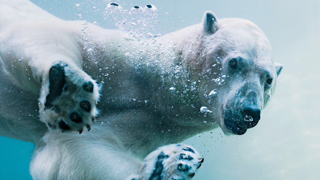 Thanks to data crunching, more people see Blizzard the polar bear at the Point Defiance Zoo & Aquarium in Tacoma, Washington.