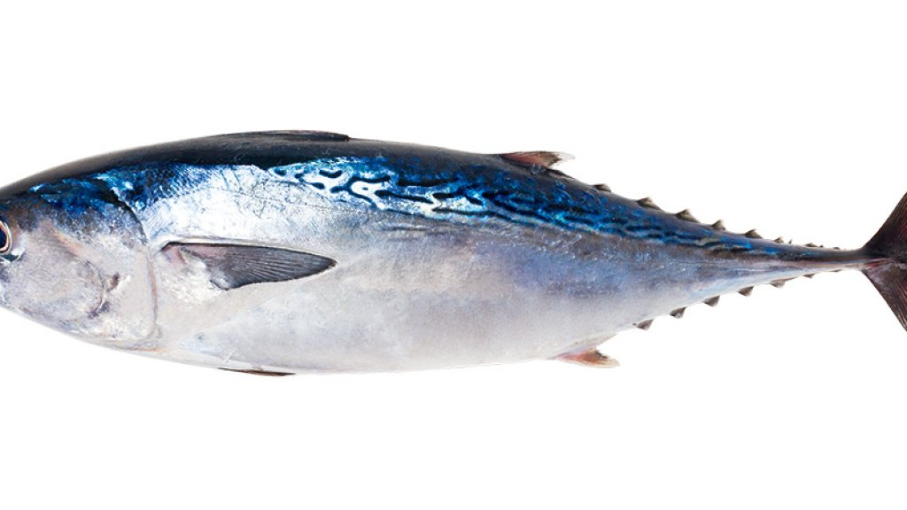 How Safe Catch Is Building a Better Can of Tuna