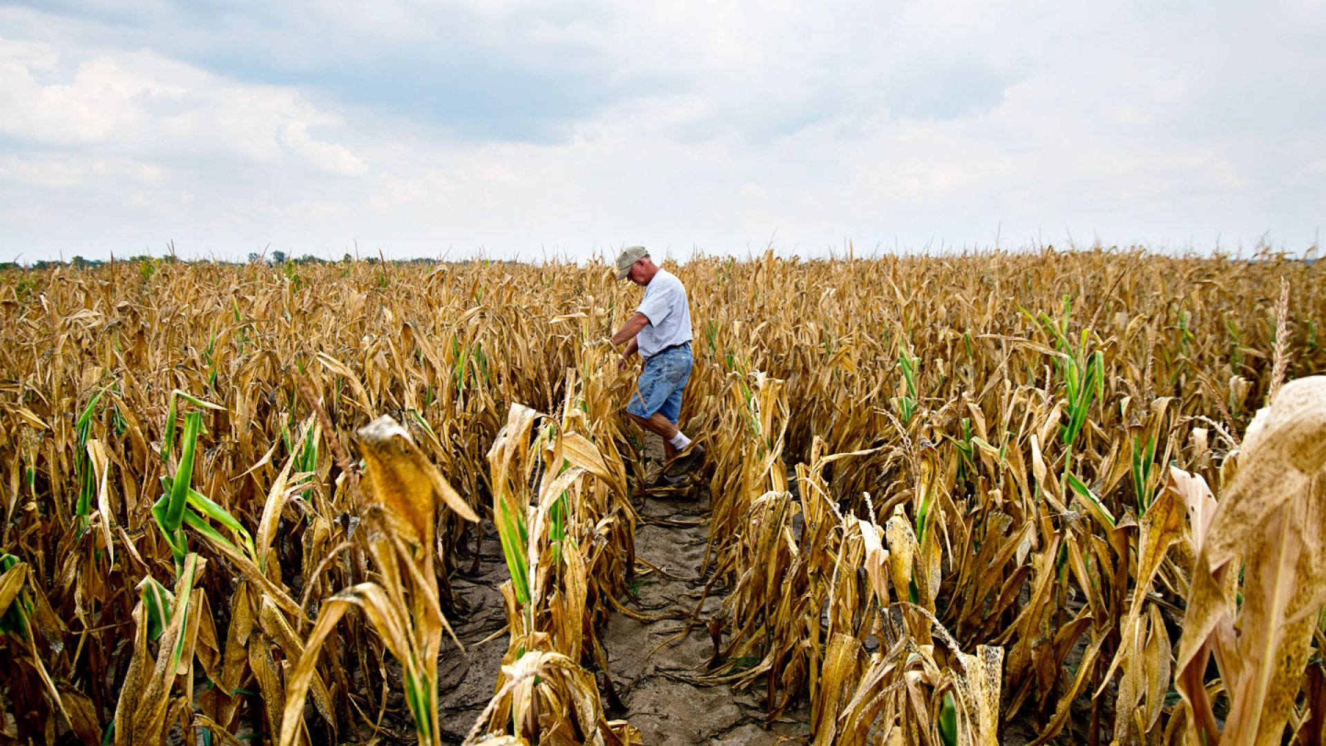 Small Businesses Bracing For Drought's Effects