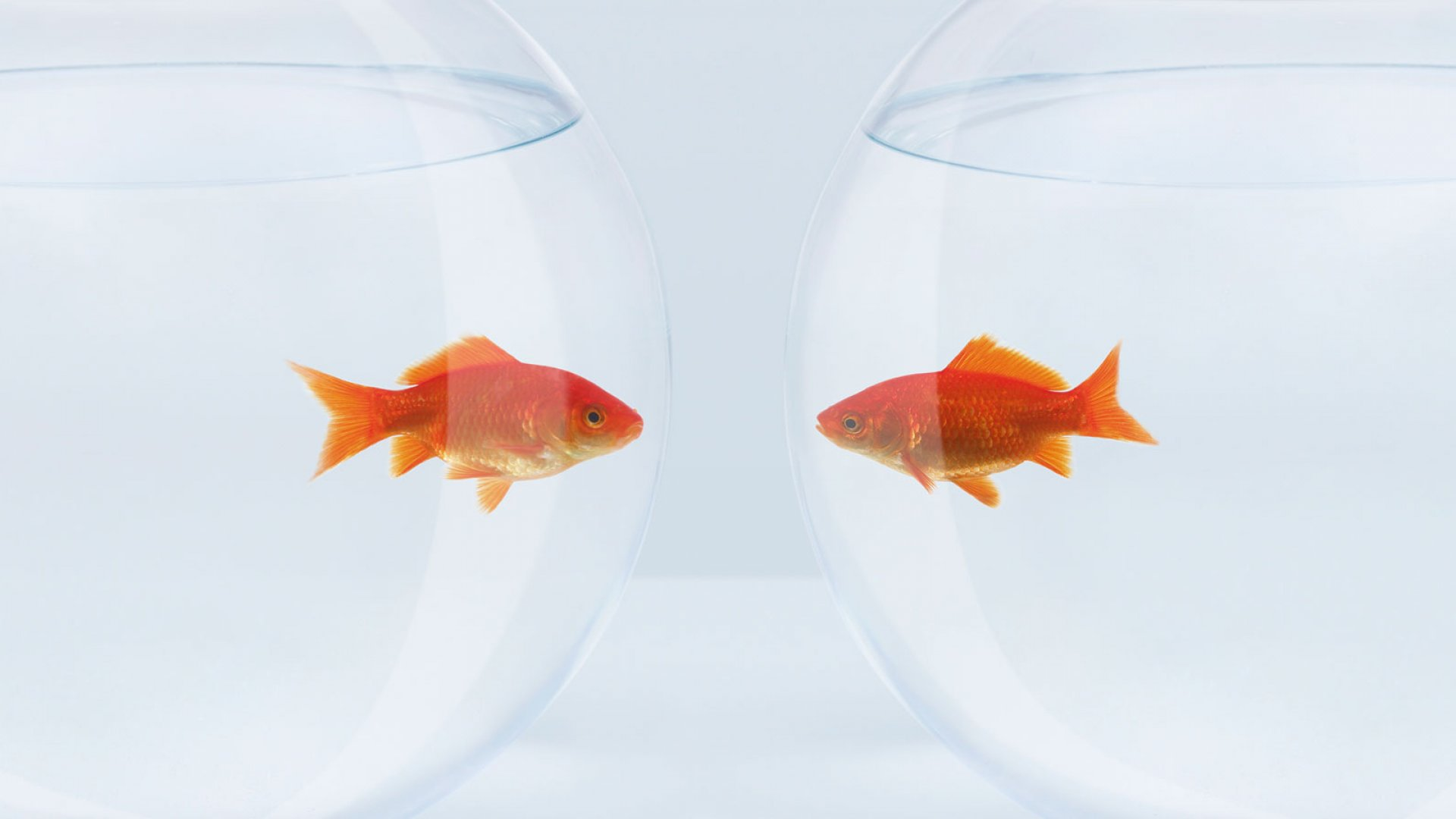 Why Face-To-Face Meetings Are Overrated
