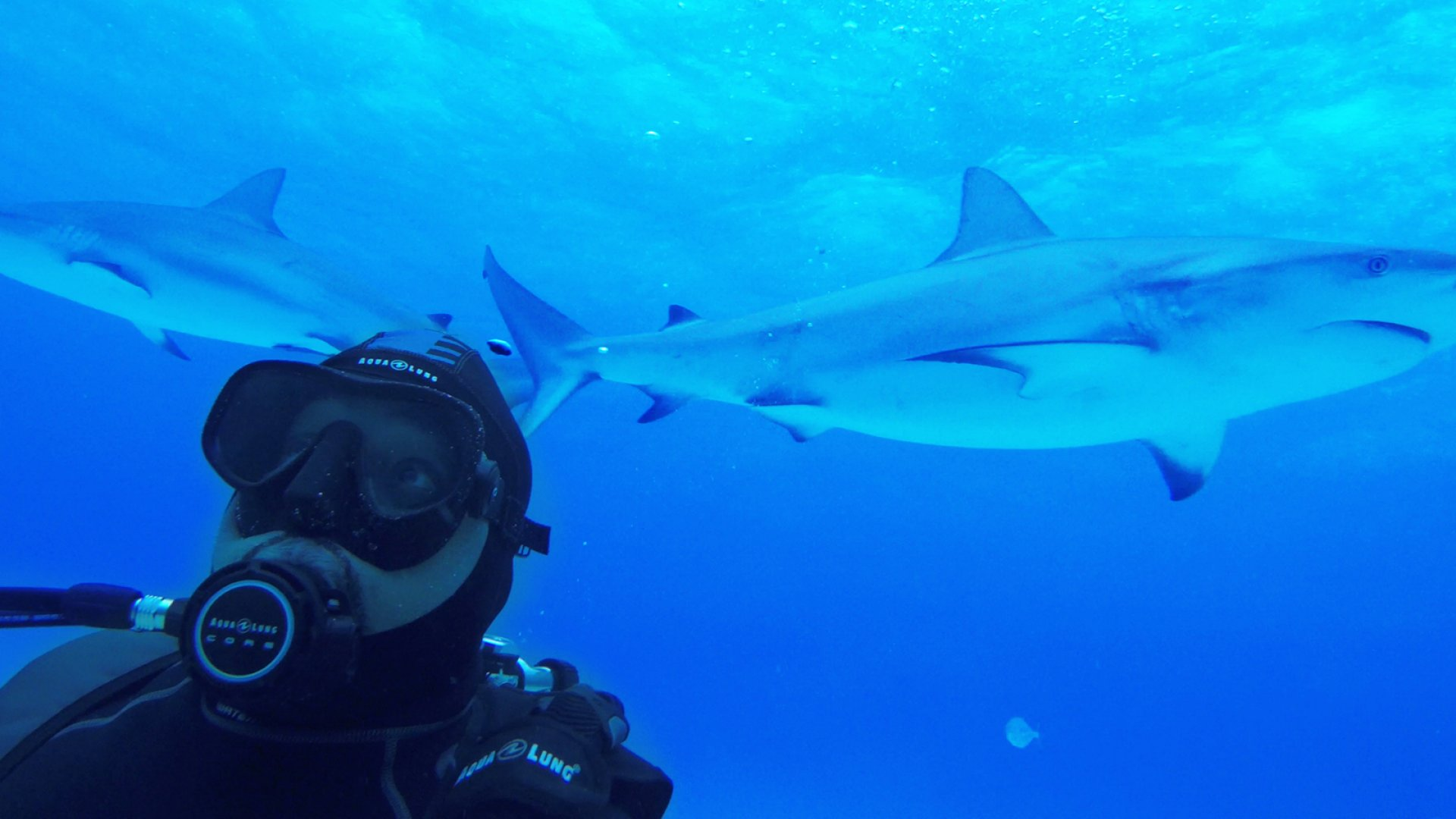 <i>Shark Tank</i>'s Daymond John swims with sharks during Discovery Channel's <i>Shark Week.</i>