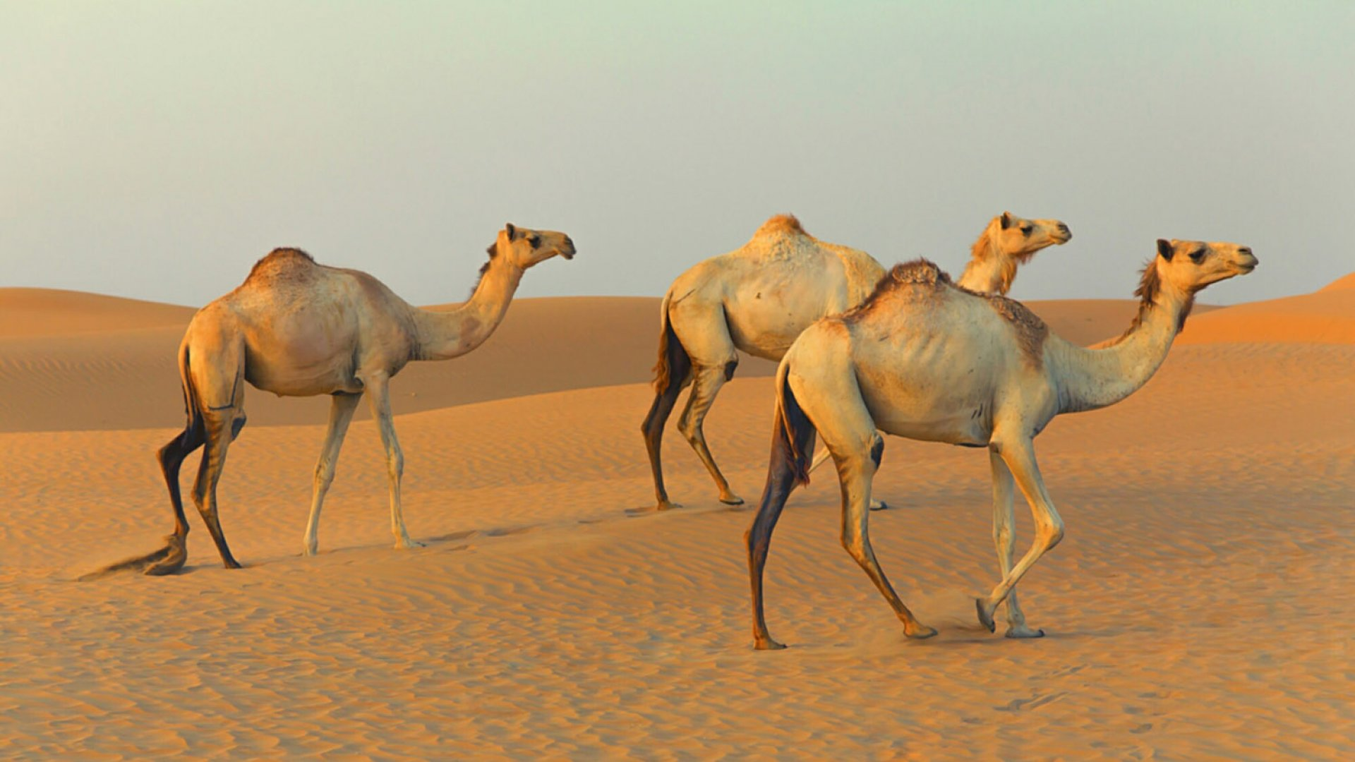 Why Startups Should Aim to Be 'Camels' Rather Than 'Unicorns'