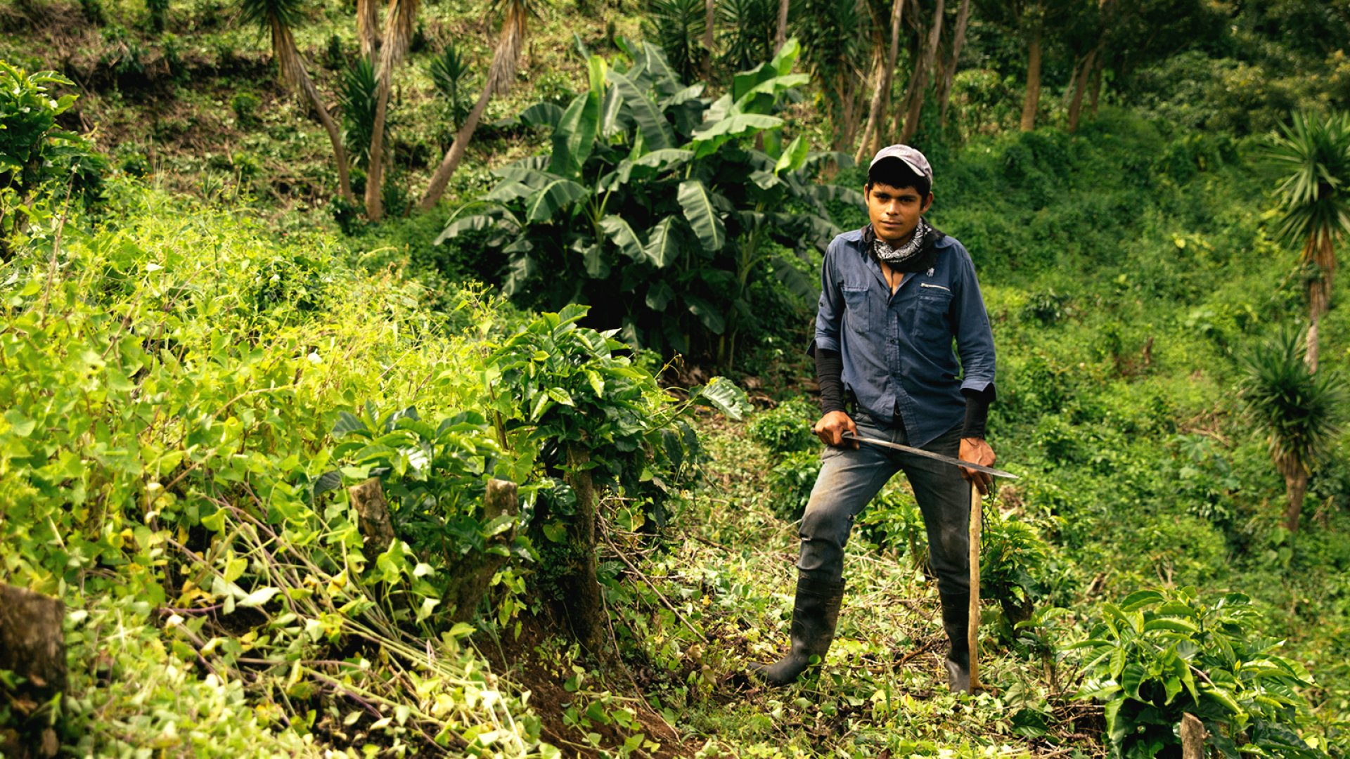 Farmer Franklin Garbanzo Ceciliano stands in a coffee field in Costa Rica. Thrive Farmers provides growers with a greater portion of coffee sales through a revenue-sharing model.