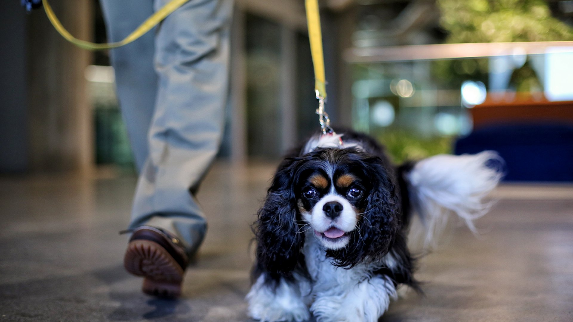 Pet-Friendly Workplaces Have Surprising Benefits for Employees
