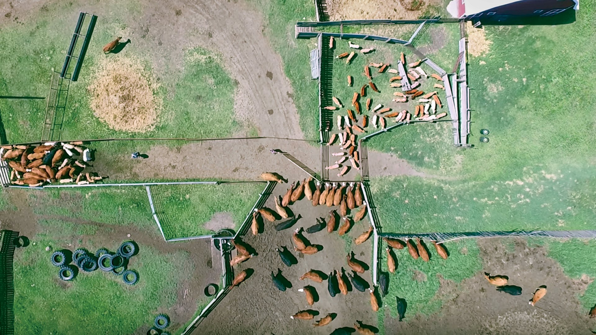 A Canadian cattle farm, as seen from a drone owned by Veterinary Agri-Heath Services' Cody Creelman.
