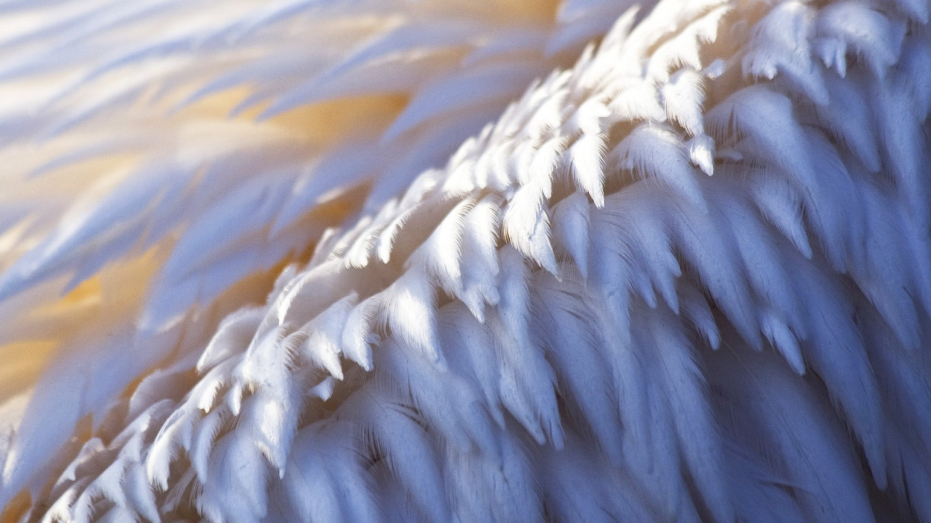 15 of the Biggest Angel Investors of All Time