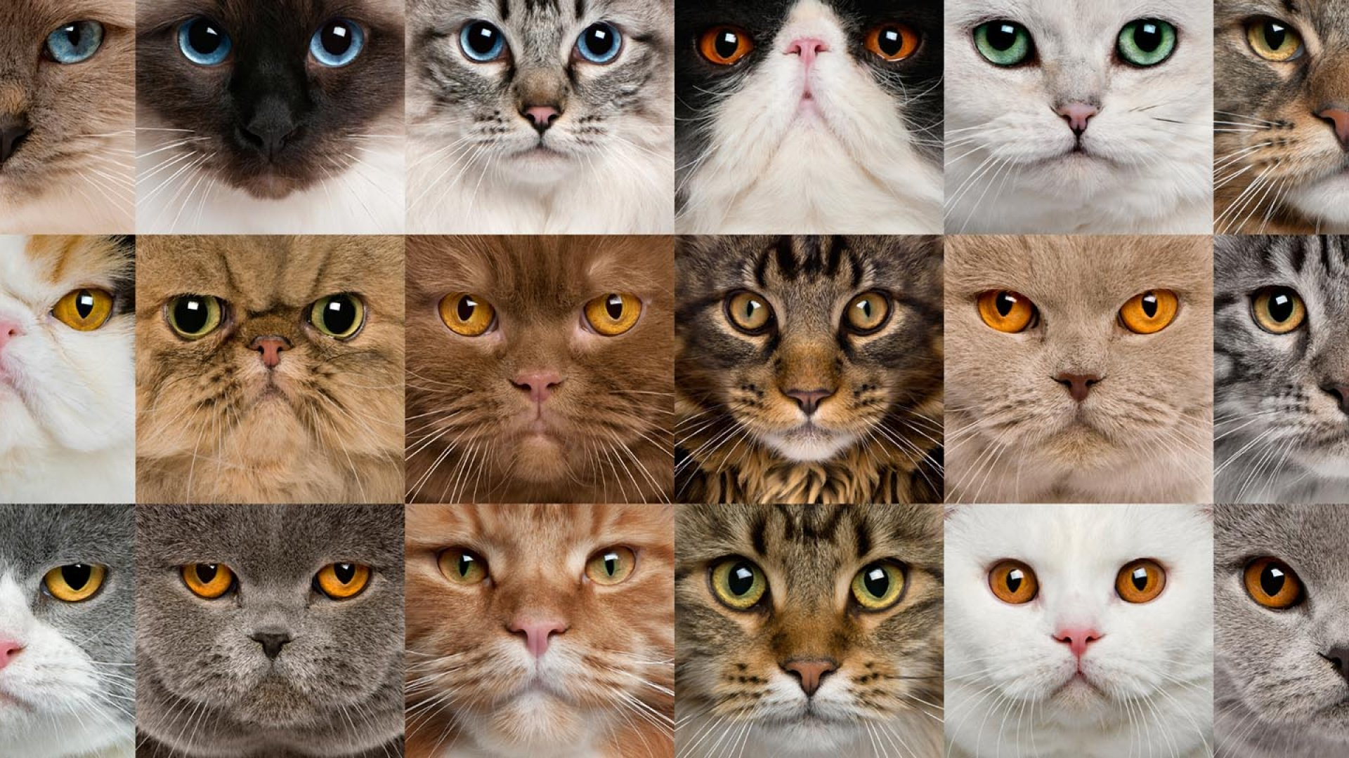 The Cat-Herding-est Job on the Planet