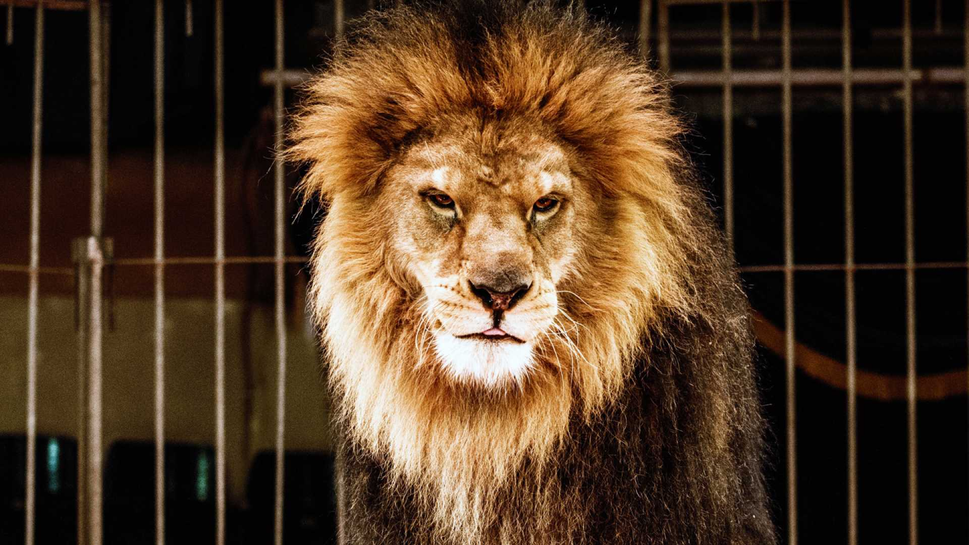 What Lion Tamers Know About Focus