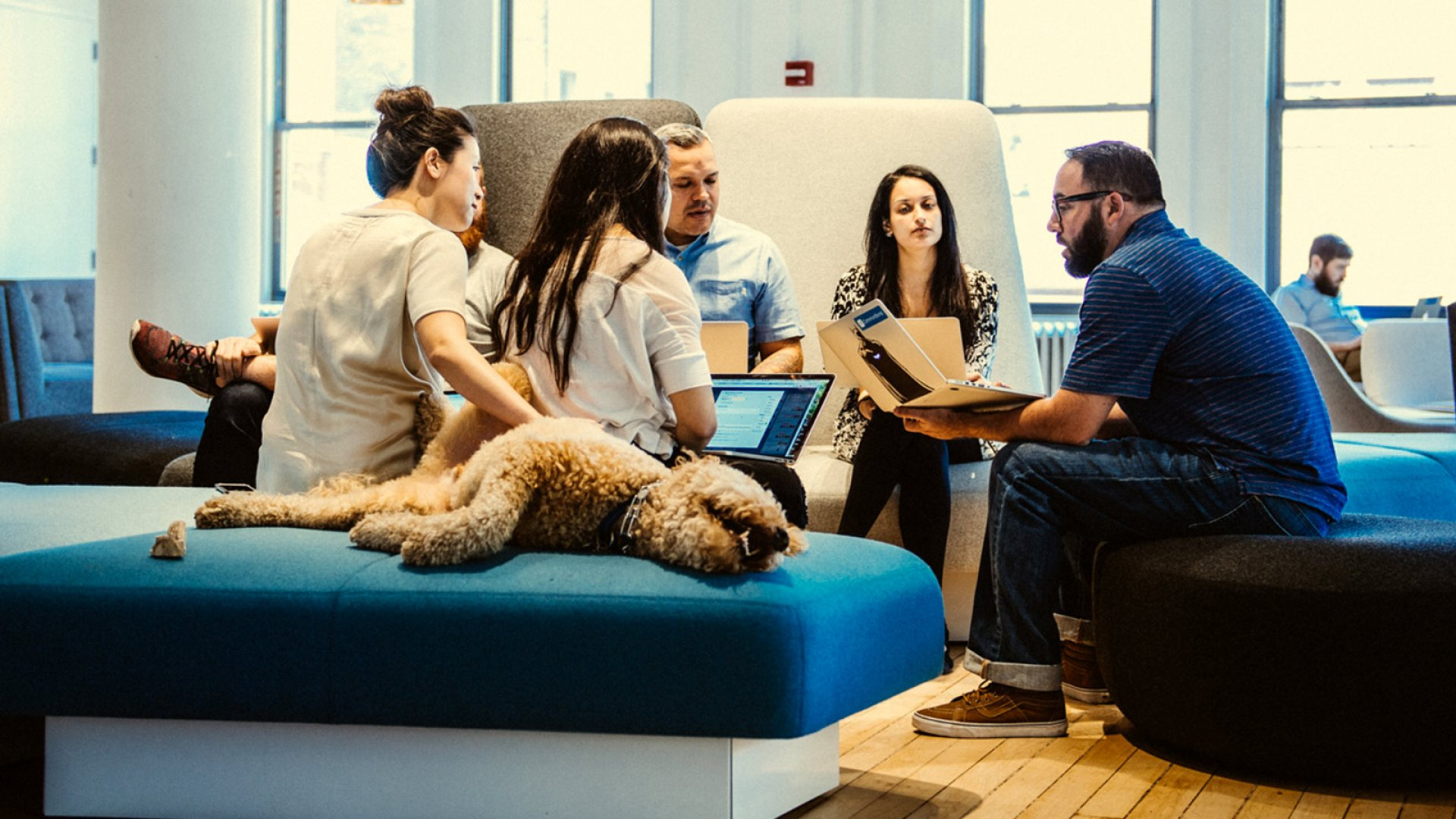 Members of the staff (and Hudson, the goldendoodle) meet in CommonBond's SoHo office.