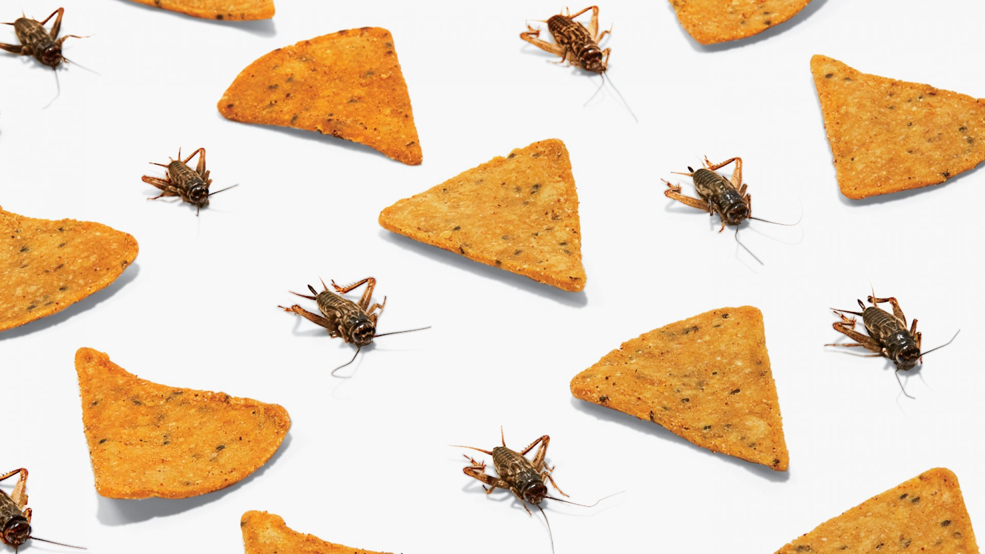 Chirps chips – in Sriracha, BBQ, and cheddar flavors – along with the creatures that give them their protein punch.