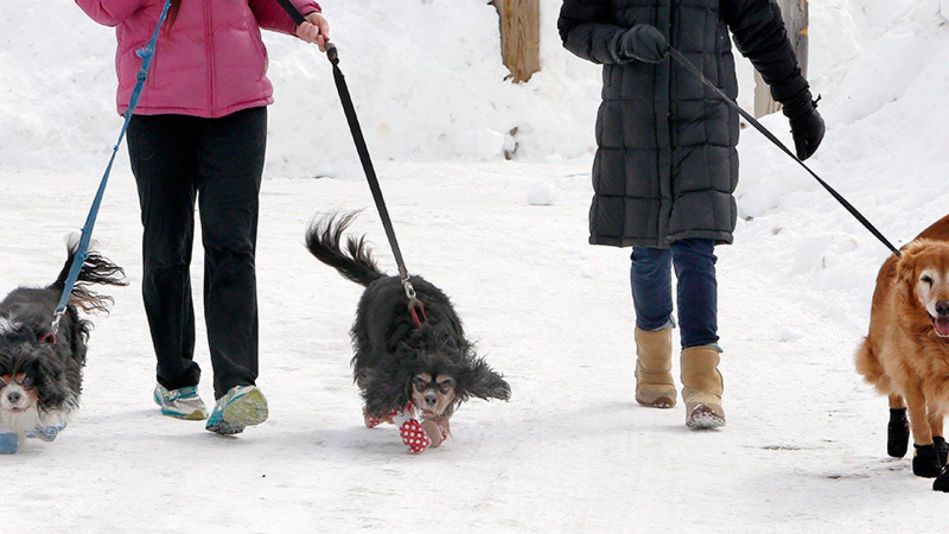 Dog Boot Company Makes a Killing Amid Bone-Chilling Winter