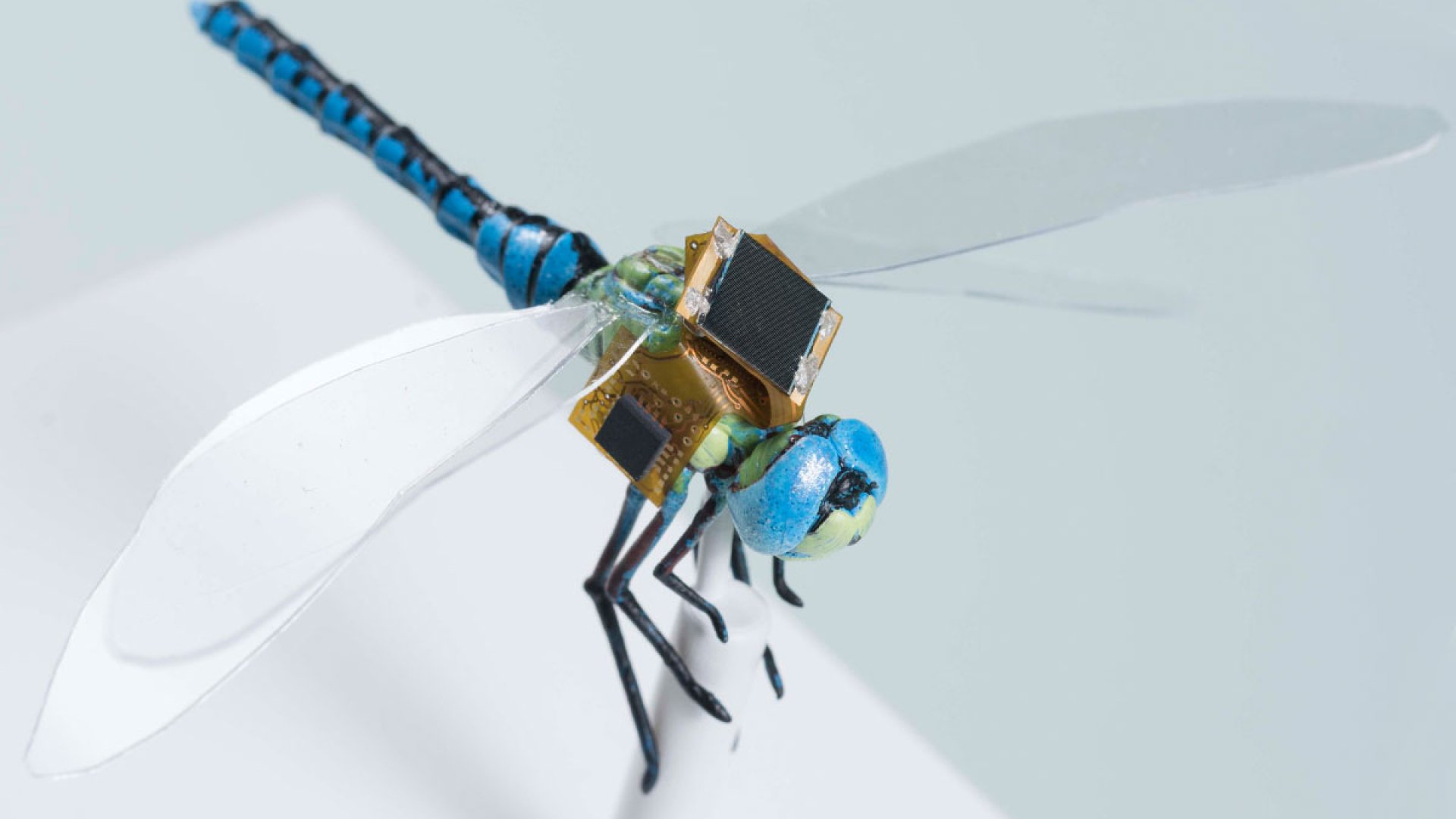 Tech Company is Turning Dragonflies into Controllable Mini Drones