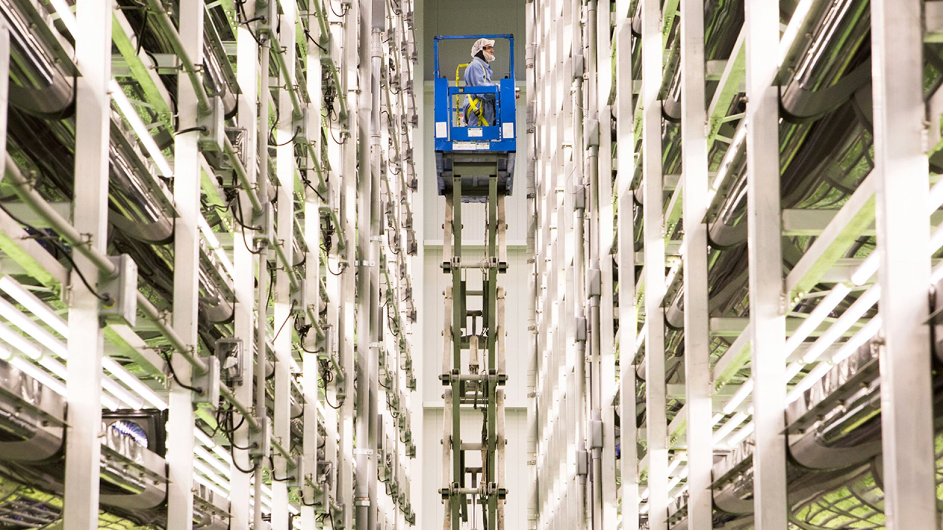 An Aerofarms employee uses a scissor-lift to check the vertically-growing greens within the company's Newark, NJ headquarters.