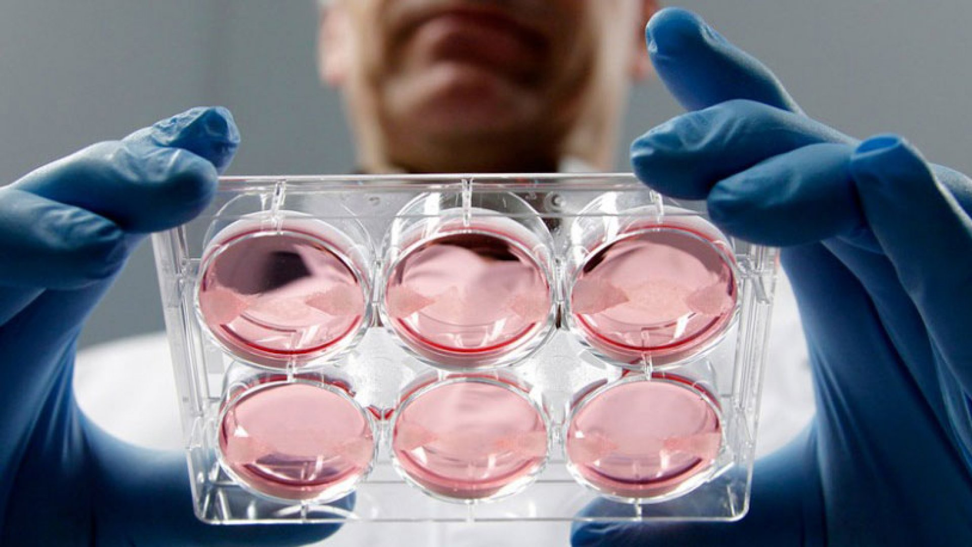 Samples of in-vitro meat, or cultured meat grown in a laboratory, at the University of Maastricht.