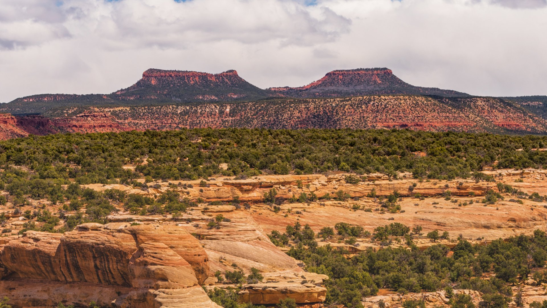 Patagonia along with the North Face and REI said they would boycott the annual Outdoor Retailer trade show usually hosted in Salt Lake City after Trump's decision to shrink Bears Ears National Monument (pictured here).