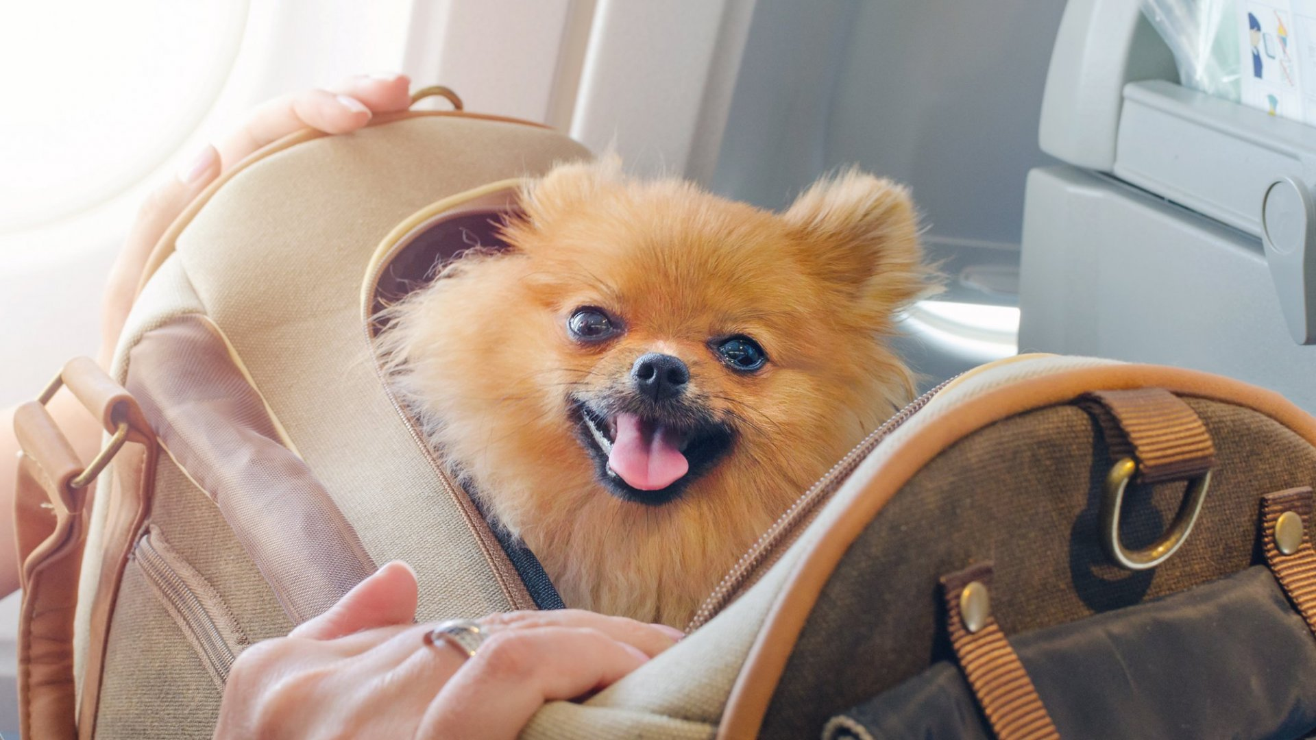 How To Travel For Business When You Have Pet Allergies