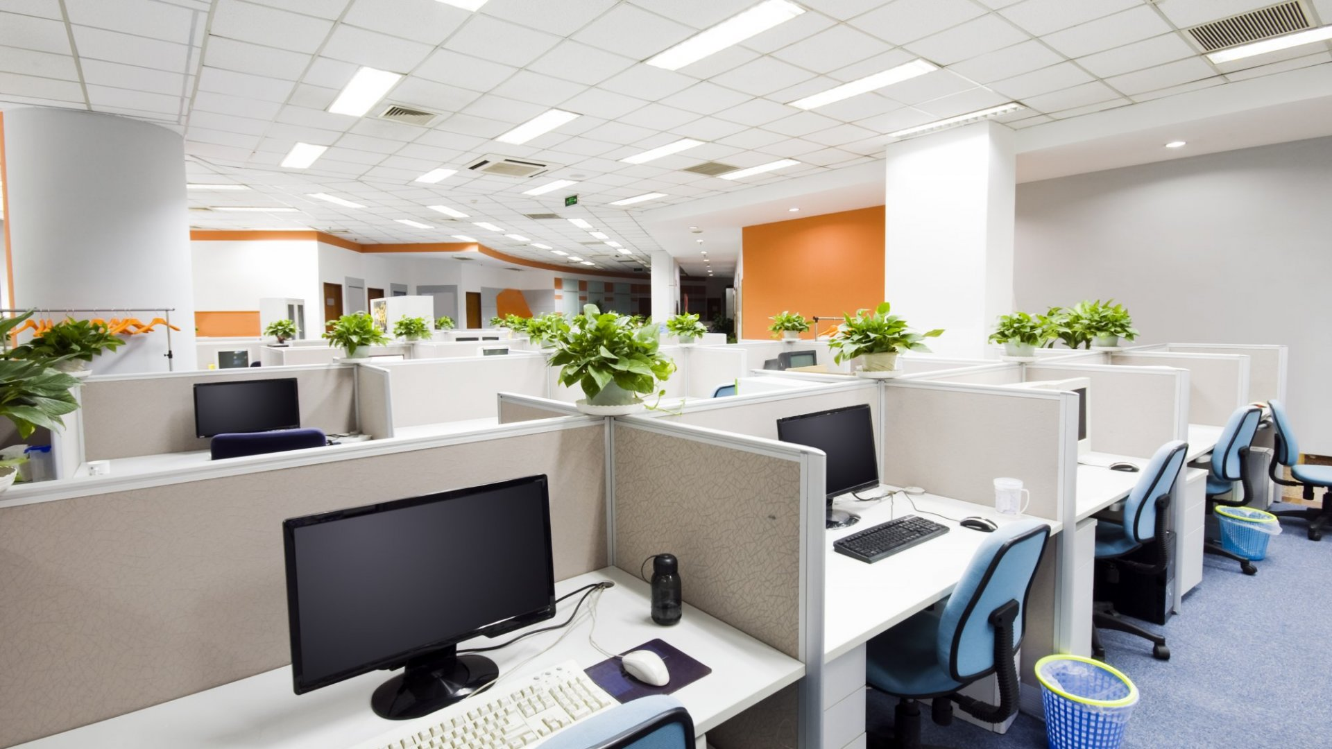 Plants create an oasis of calm in a stressful office environment.