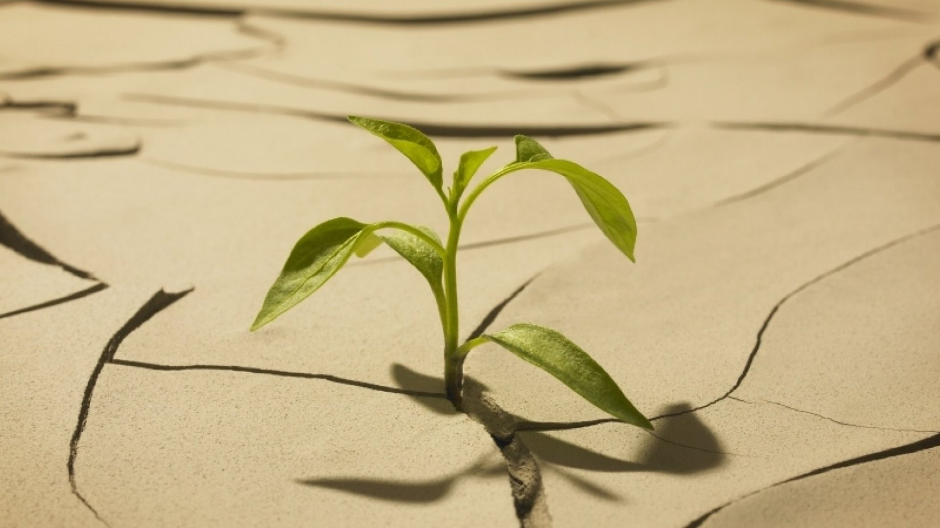 5 Signs of a Great Startup in the Earliest Stage