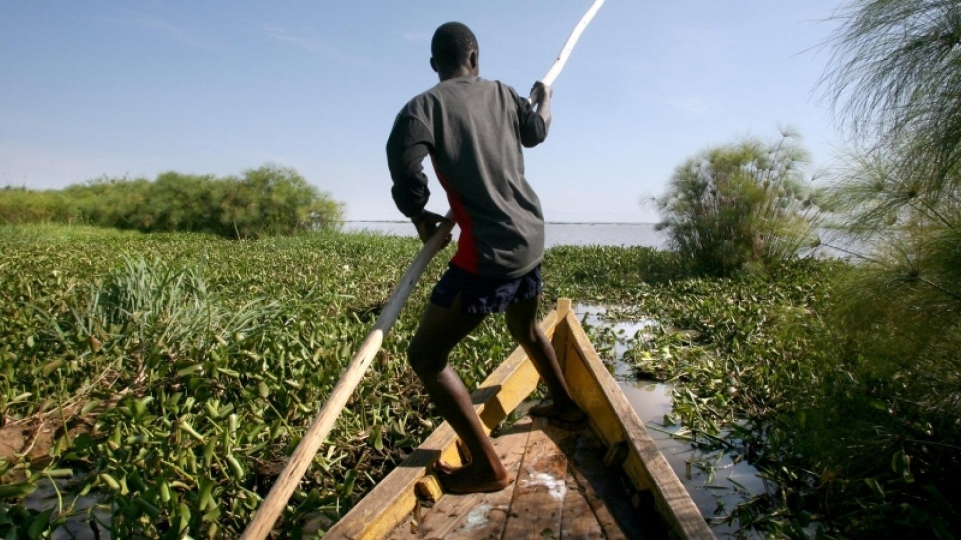 How One Entrepreneur Turned an Invasive Weed Into a Successful Business