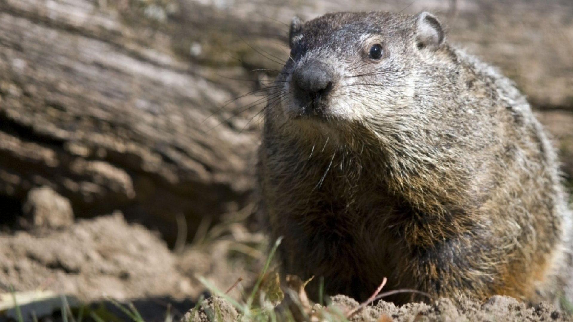 "Small Business Owners Should Not Repeat ""Groundhog Day"""
