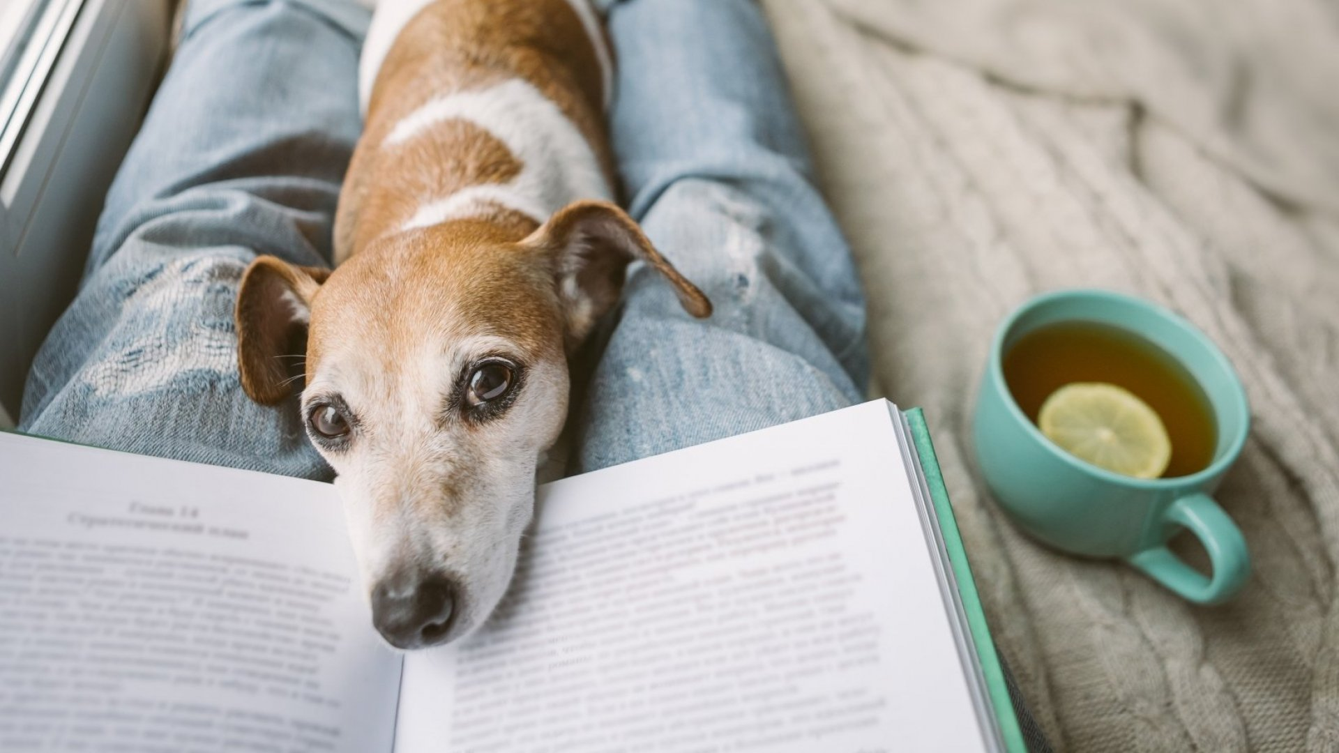 5 Books to Read If You're Stuck at Home Thanks to Coronavirus