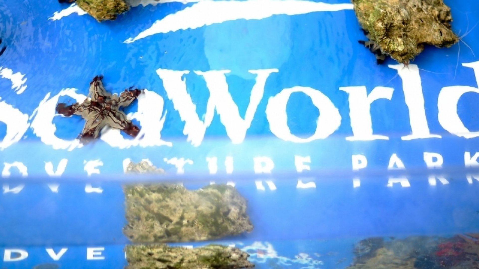 SeaWorld Sent Out Spies. Does Your Competitor?