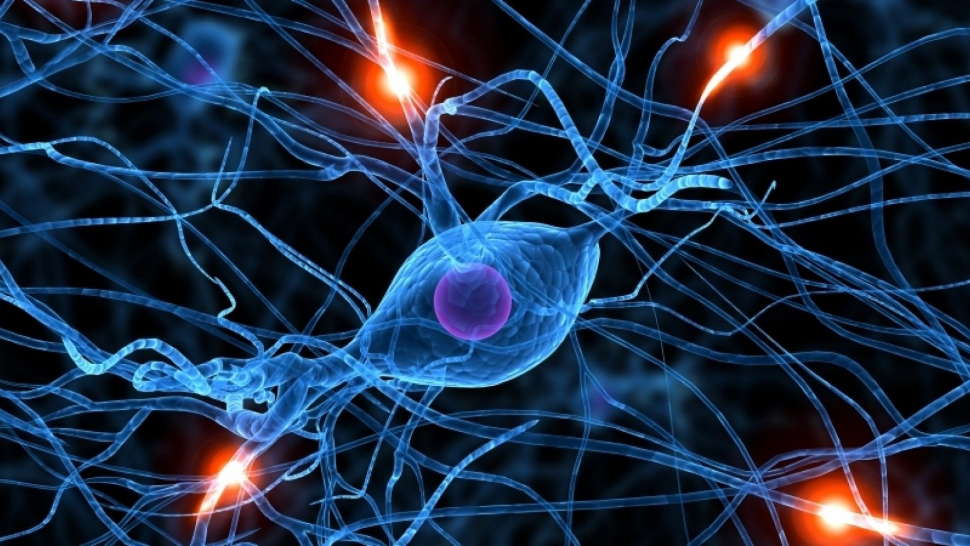 Science: Yes, It's Possible to Grow New Brain Cells