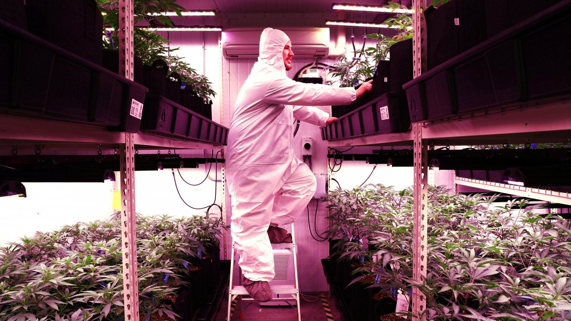 The State of the Cannabis Industry Amid the Pandemic