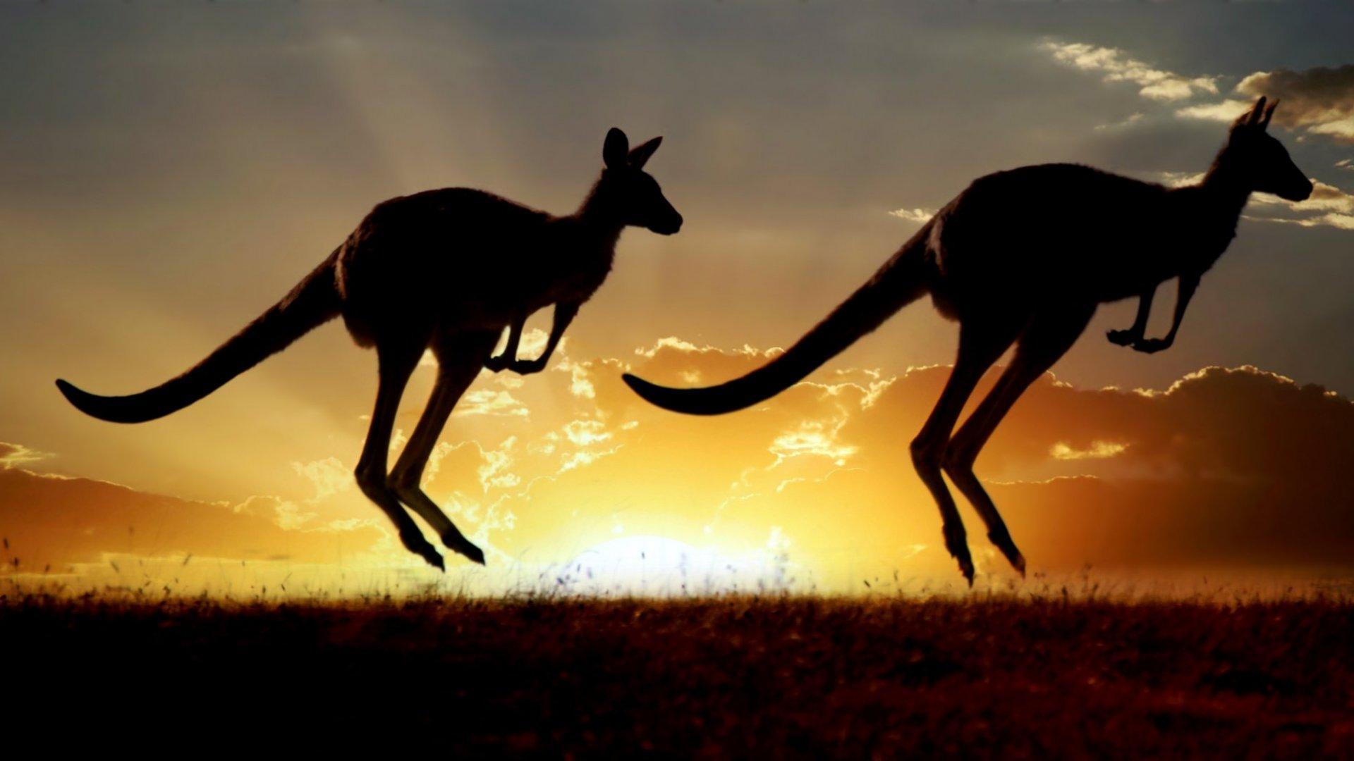 5 Reasons Australia Is Becoming an Innovation Hub