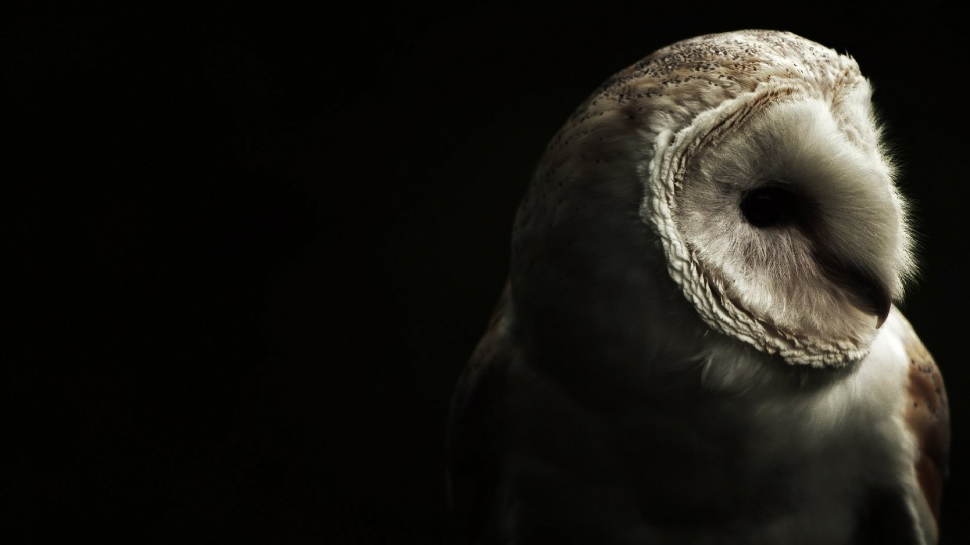 The World's Inflexibility Is Literally Killing Night Owls, New Study Finds