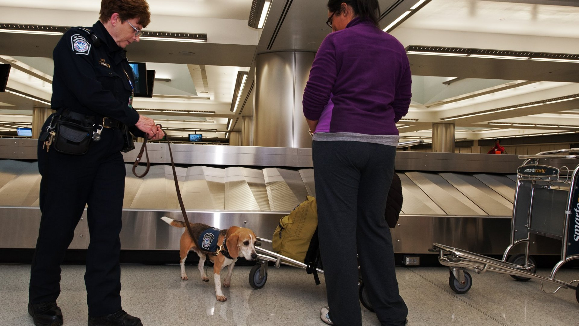 Homeland Security Department Asks Entrepreneurs to Make Wearables For Canines