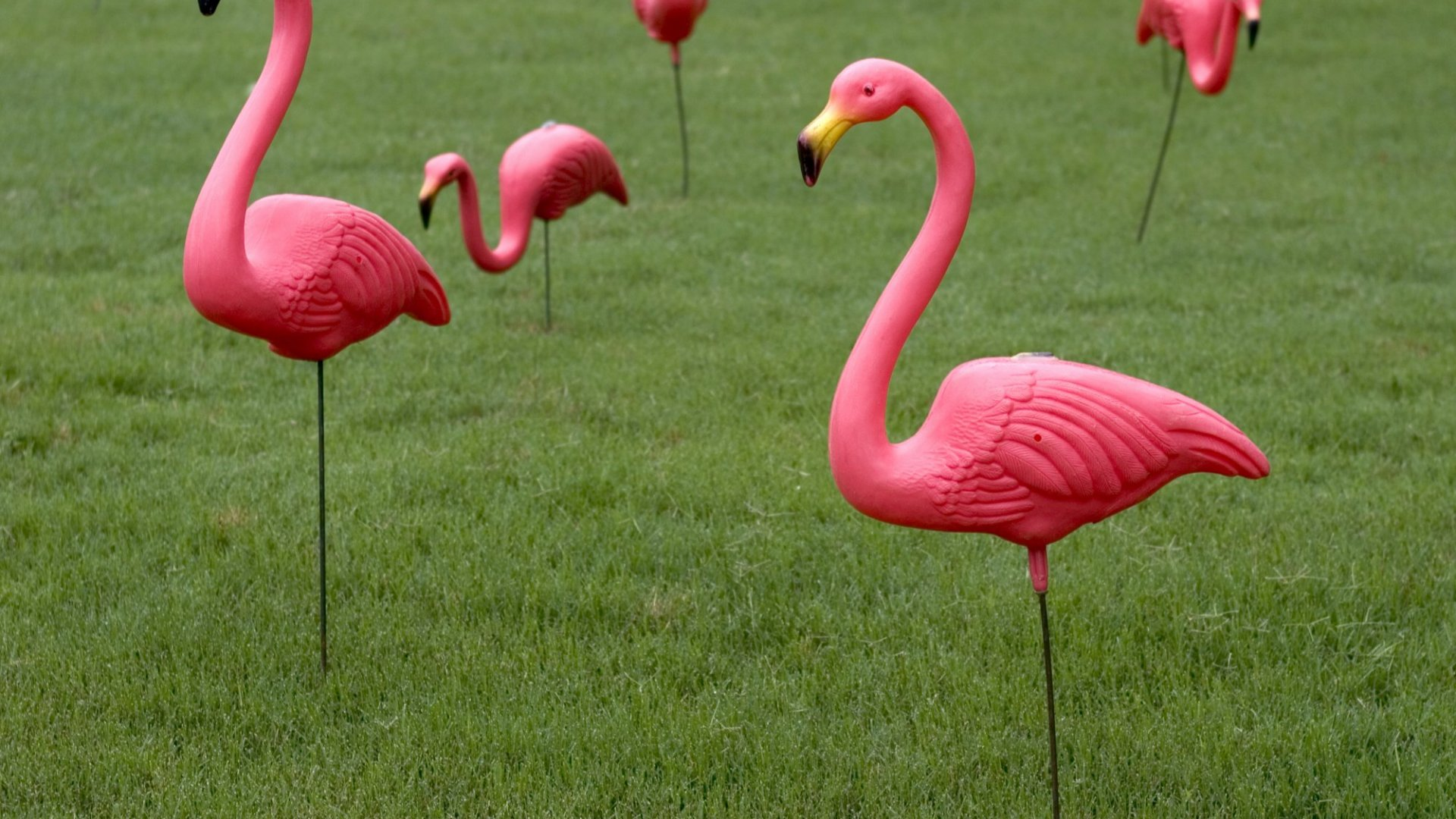 One Major Design Lesson From the Creator of Plastic Pink Flamingos