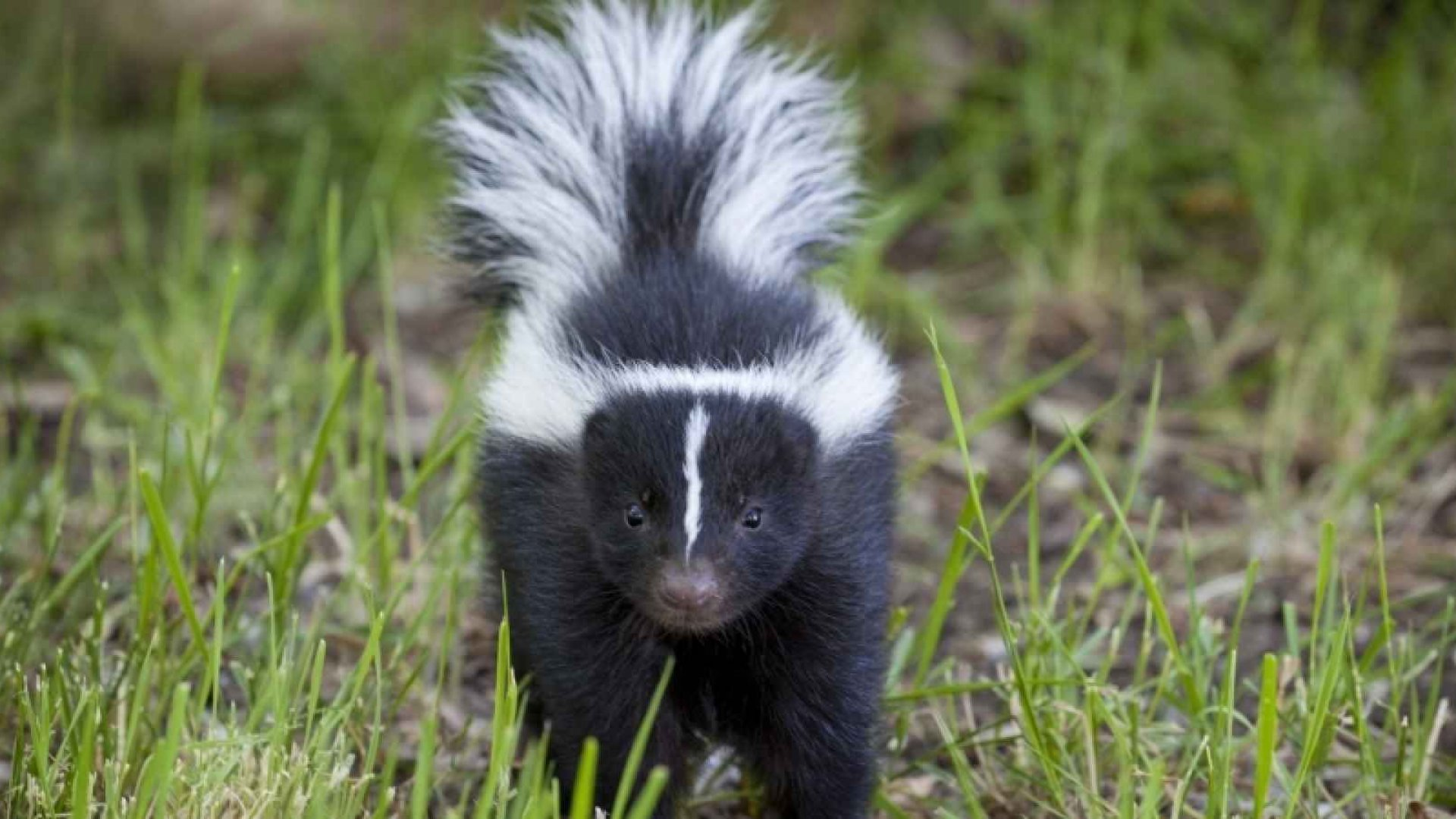 The Problem With Skunks: How to Deal With a Toxic Employee