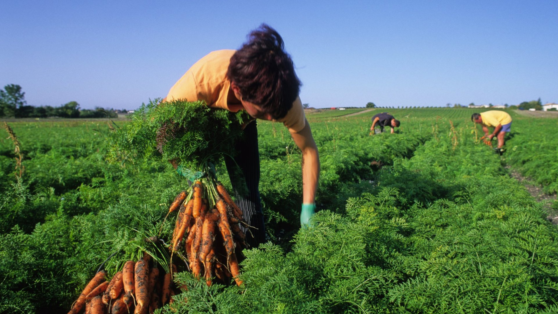 The Role of Immigrants in Our Food System