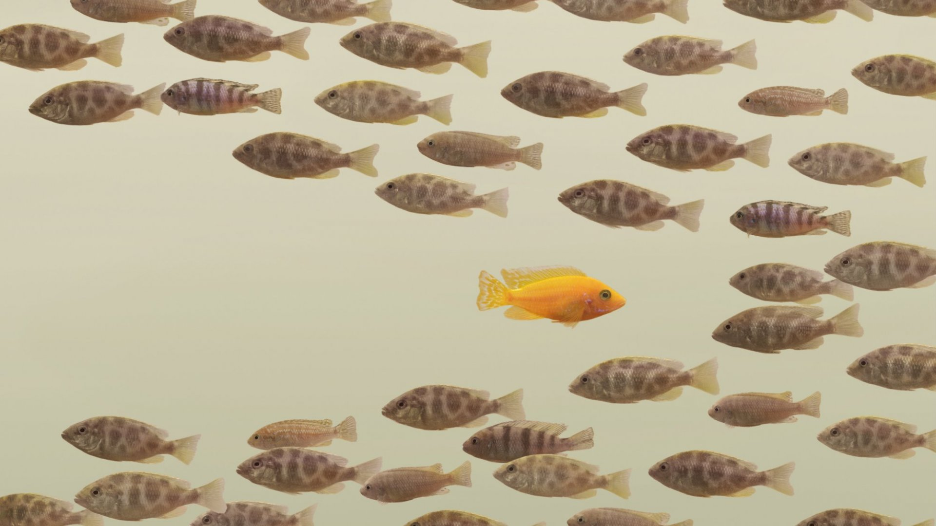 Resistance is Futile: Why Fighting Change is Bad For Your Career