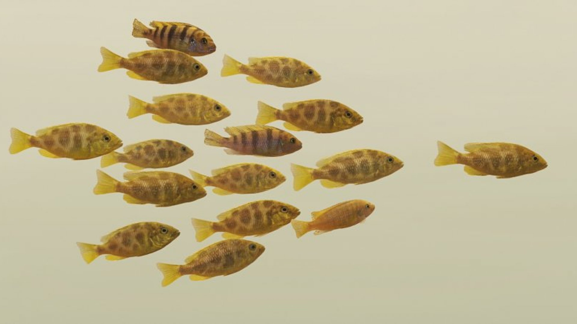 How to Navigate the Transition From Founder to Leader
