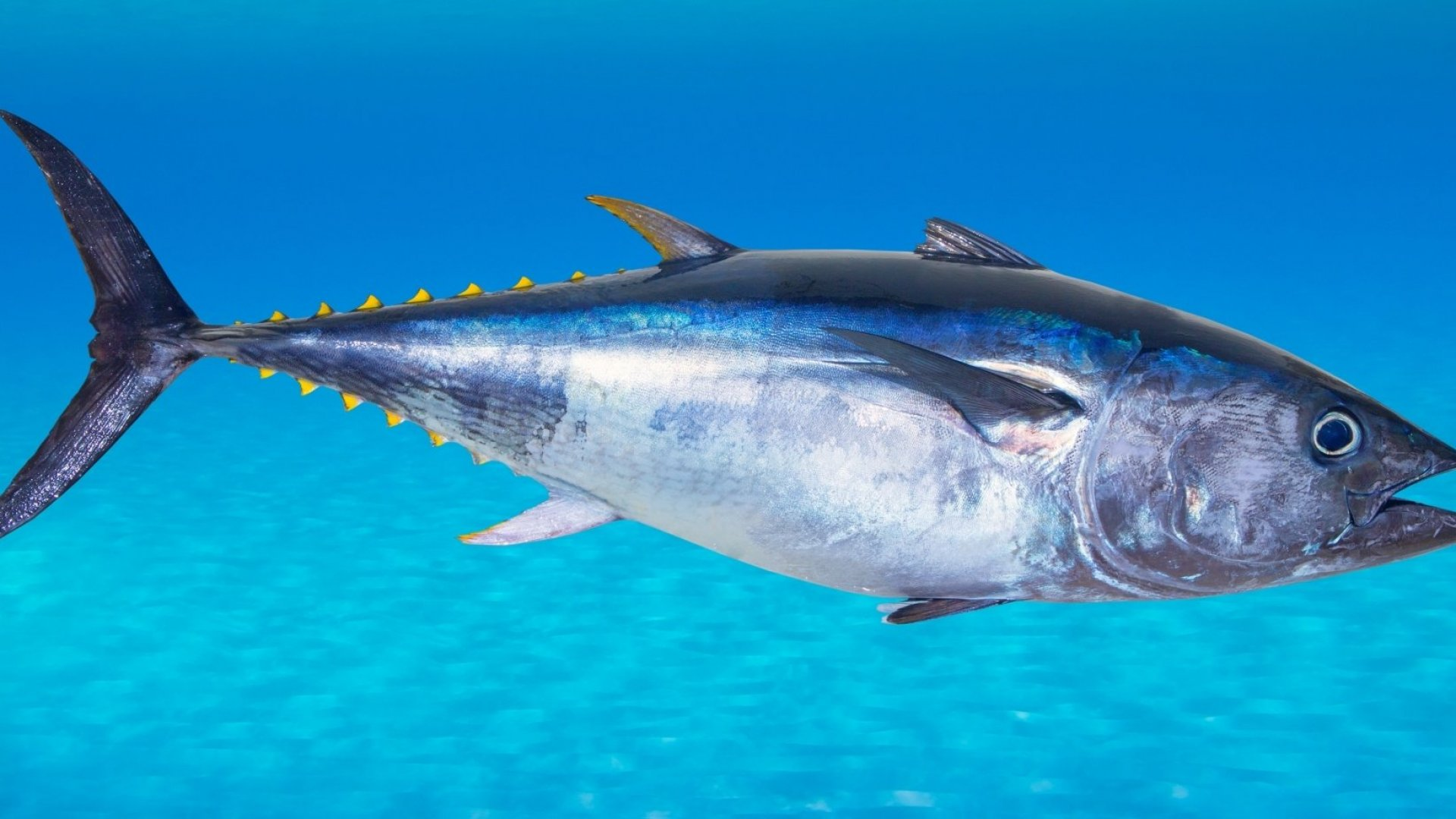 How Your Tuna Is About To Get Plant-Based