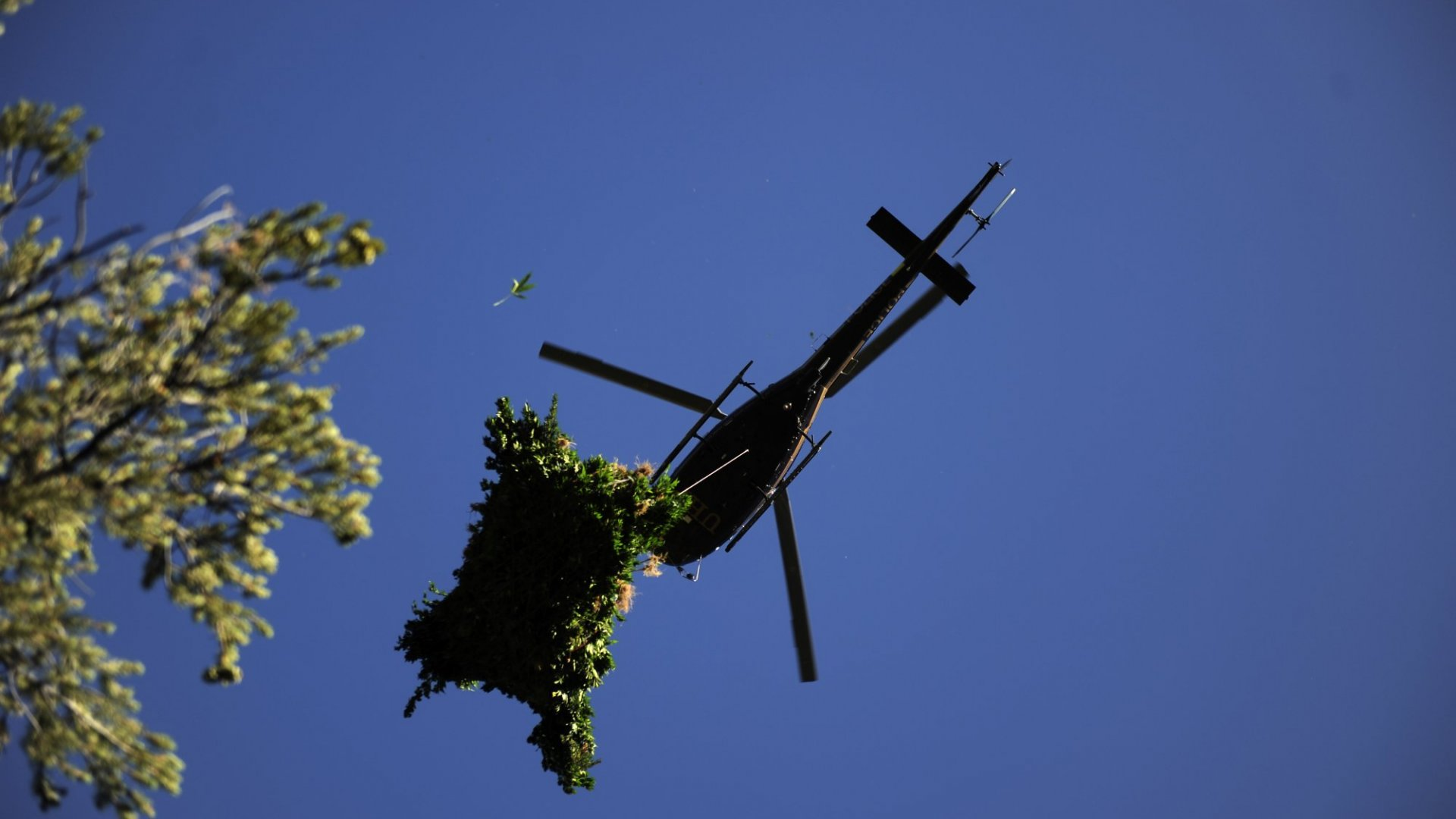 The DEA's black helicopters might not be looking for marijuana if the agency decides to reschedule the drug.