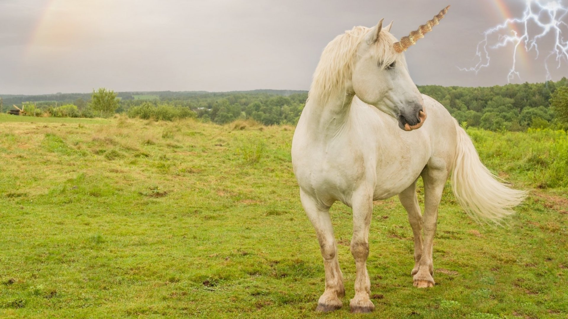What Comes After the Era of Unicorns (According to 8 VCs)